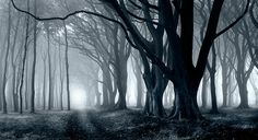 Trees in the Mist-Blue by welshio, via Flickr