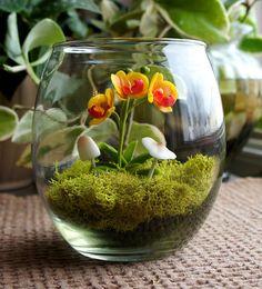 Tiny Phalaenopsis Orchid Terrarium - www.missmossgifts.com/shop/mini-phalaenopsis-orchid-terrarium/