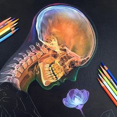 Started a new drawing! I was nervous about drawing on black paper for the first time but so far it's been a fun challenge! by morgandavidson Art Sketches, Art Drawings, Sick Drawings, Drawing Faces, Colorful Drawings, Black Paper Drawing, Colorful Skulls, Art Manga, Art Watercolor