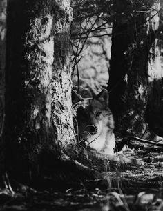 È come una rarità. Un misto fra il lupo e cappuccetto rosso. : Foto