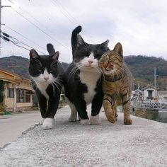 I love cute cats and kittens 'cuz they bring me happiness. Pretty Cats, Beautiful Cats, Animals Beautiful, Funny Cat Videos, Funny Cats, Baby Animals, Cute Animals, Sleepy Animals, Fluffy Animals