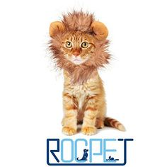 Rocpet Pet Costume Lion Mane Wig for Dog Cat Halloween Dress up with Ears (lion) - http://www.thepuppy.org/rocpet-pet-costume-lion-mane-wig-for-dog-cat-halloween-dress-up-with-ears-lion/