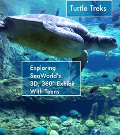 Turtle Trek at SeaWorld Orlando appeals to teens and tweens as well as kids. This attraction is high-tech, fun and educational
