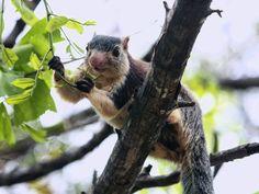 Netravali Wildlife Sanctuary in Goa,India