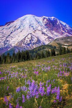 ✯ Mount Rainier Meadow