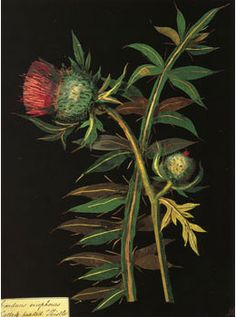 Images<Mary Delany<The Sister Arts - British Gardening, Painting,&Poetry1700-1832