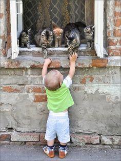 Les langages des petits humains et des petits chats se ressemblent.