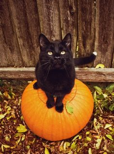 Kitty on a pumpkin