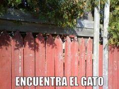miaucoles_encuentra_el_gato_4