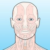 Lymph node groups of the head and neck region with