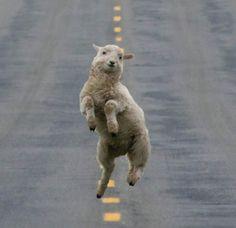《動物界的舞王》星期一的早上快來跟我動次動次