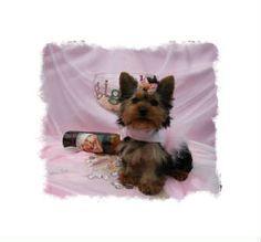 Yorkie tea cup puppies Mini Puppies, Yorkies, Little Dogs, Beautiful Creatures, Tea Cups, Fox, Teddy Bear, Funny, Cute
