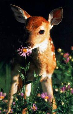 Deer. Especially little baby Fawns