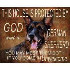 Like  it just needs to be German Shepherd Dobie mix.