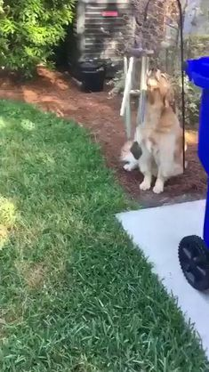 Cute Funny Animals, Cute Baby Animals, Animals And Pets, Cute Animal Videos, Funny Animal Pictures, Funny Dog Videos, Funny Dogs, Pet Videos, I Love Dogs