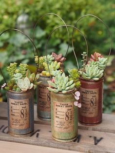 Organic Kitchen Gardening By Maitri Mehta Refferal: 4996452793 Succulents In Containers, Container Plants, Cacti And Succulents, Planting Succulents, Container Gardening, House Plants Decor, Plant Decor, Succulent Gardening, Organic Gardening