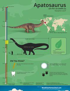 Apatosaurus Dinosaur Fact Sheet & Infographic  #infographic #dinosaur #homeschool #printables