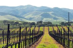 As one of the largest wine regions in California, Paso Robles has hundreds of wines to taste and enjoy. Discover Paso Robles wine tastings today with. Affordable Vacations, Best Vacations, Vacation Trips, Vacation Spots, Vacation Travel, Vacation Ideas, Central Valley California, California Wine, Northern California