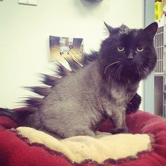 """""""Oh god. My girlfriend's going to kill me."""" 