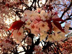 2015,04,02 Kyoto