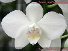 Gumpaste orchid tutorials