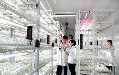 새로운 화초품종을 육종하기 위해 -국가과학원 생물공학분원에서-