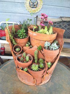 My little succulent garden