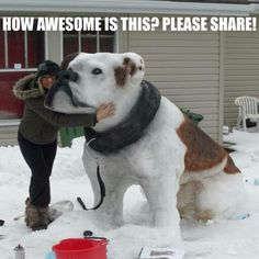 Funny pictures about Impressive Snow Sculpture. Oh, and cool pics about Impressive Snow Sculpture. Also, Impressive Snow Sculpture photos. Cute Funny Animals, Cute Dogs, Big Dogs, Diy Pour Chien, Ice Art, Snow Sculptures, Dog Sculpture, Ceramic Sculptures, Snow Art