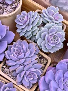 Succulents - New Ideas Types Of Succulents Plants, Cacti And Succulents, Planting Succulents, Cactus Plants, Garden Plants, House Plants, Planting Flowers, Flowers Garden, Succulent Landscaping