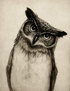 The detail and realism is fantastic, the tilt of the owls head makes it more believable