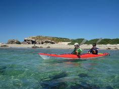 Kayak with dolphins and seals in the beautiful Shoalwater Marine Park, Rockingham with Capricorn Seakayaking