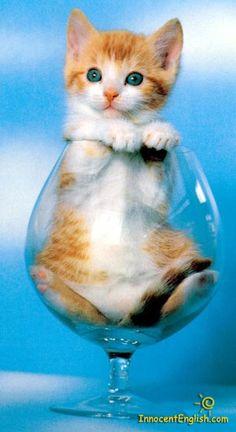 ..Funny Kittys