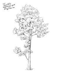 Image result for How to Draw Realistic Trees