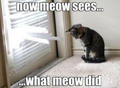 Meow er ked af