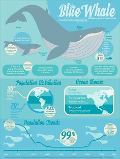 Blue Whales: The Infographic on Behance Animals Information, Save The Whales, Whale Art, Marine Biology, Blue Whale, Graphic Design Posters, Grafik Design, Data Visualization, Layout Design
