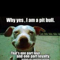 Pitbulls = love!