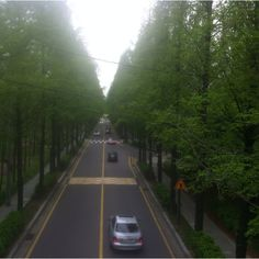 walking route beside a metasequoia tree in Seoul