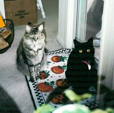 Blossom & Yoda - Halloween 1994