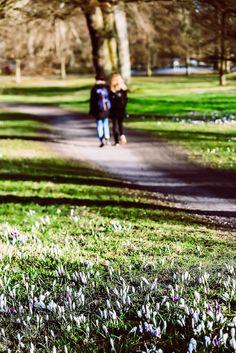 En forårsmorgen i Folkeparken - Dit Roskilde