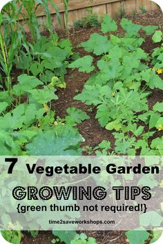 7 Vegetable Garden Growing Tips!  {green thumb not required} #gardening http://www.time2saveworkshops.com/green-thumb-not-required-7-super-vegetable-garden-growing-tips/