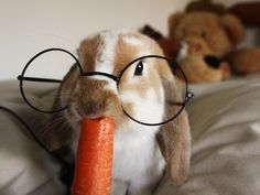 """I can finally say """"Yes, Dad, I HAVE seen a rabbit wearing eyeglasses!"""""""