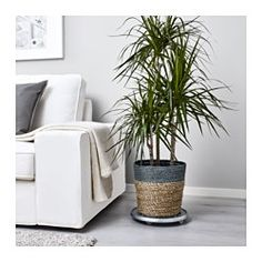 KRUSBÄR Plant pot, gray, natural - IKEA