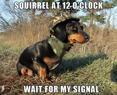 Squirrel - 12 oclock! Hahaha this is so how my dog acts. He loves to chase squirrels. Its so funny