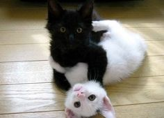 Ebony and Ivory live together in perfect harmony!