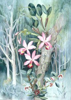 Flores da Floresta Amazônica  Margaret Mee