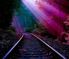 Image shared by conny. Find images and videos about nature and train on We Heart It - the app to get lost in what you love. By Train, Train Tracks, Train Rides, Beautiful World, Beautiful Places, Beautiful Scenery, Simply Beautiful, Beautiful Sites, Beautiful Landscapes