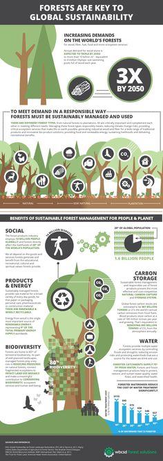 Infografía sobre la importancia vital de los #bosques y su gestión #sostenible