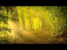 "Relaxing sleep music for deep sleeping and stress relief. Fall asleep to beautiful nature videos and use the relaxing music (""Flying"" by Peder B. Morning Verses, Forest Sounds, Forest Background, Natural Background, Beautiful Morning, Meditation Music, Yoga Music, Relaxing Music, Latter Day Saints"