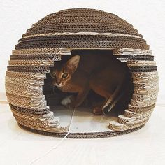 Wall Cat Scratching Post Idea Good To Know Cat