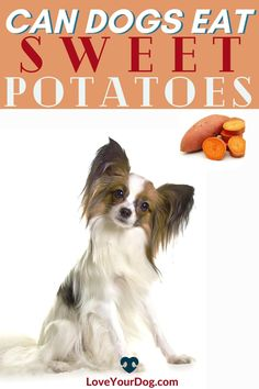 Curious to find out if dogs can eat sweet potato? We look at all the nutritious benefits this superfood can provide your pup in this article! #loveyourdog #candogseat #whatcandogseat #whathumanfoodscandogseat #candogseatsweetpotatoes #sweetpotatoes #dogcare